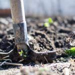 Aaltjes tegen mieren - Feiten en ervaring