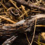 Hoe kom je van mieren af? Een grondige aanpak!