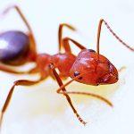 Mieren bestrijden: Een gids voor binnen en buiten