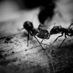 Mieren in huis nest onvindbaar - wij weten raad!