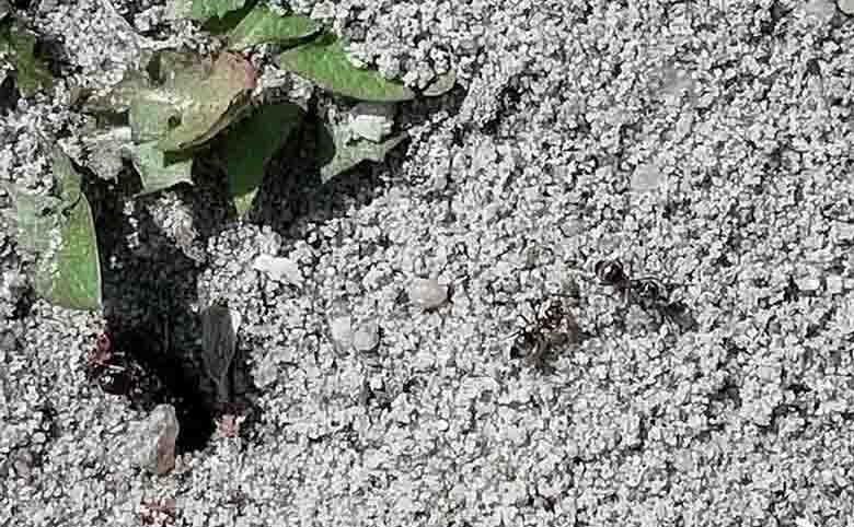 Een mierennest met water aanpakken