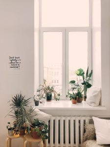 Planten tegen mieren