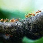Welke mieren hebben wij in Nederland en waar komen zij voor?