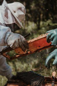 Het goed onderhouden van je bijenkast is zeer belangrijk