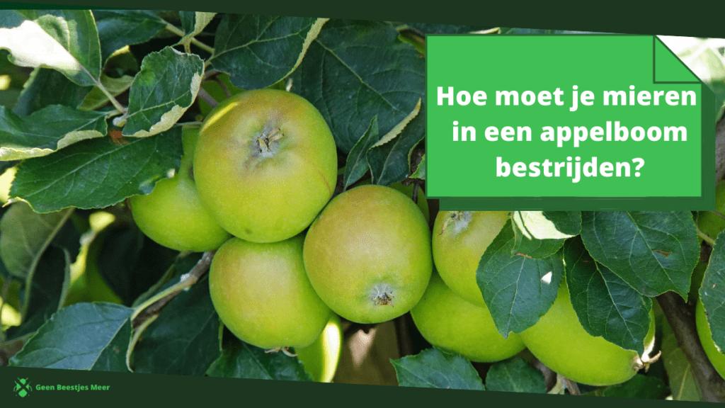 Hoe moet je mieren in een appelboom bestrijden_