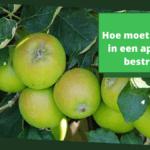 Hoe moet je mieren in een appelboom bestrijden?