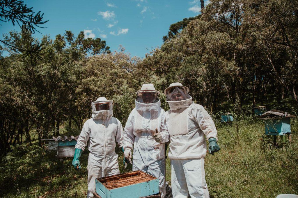 Mieren in bijenkast bestrijden