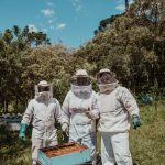 Mieren in een bijenkast bestrijden: de beste methode.