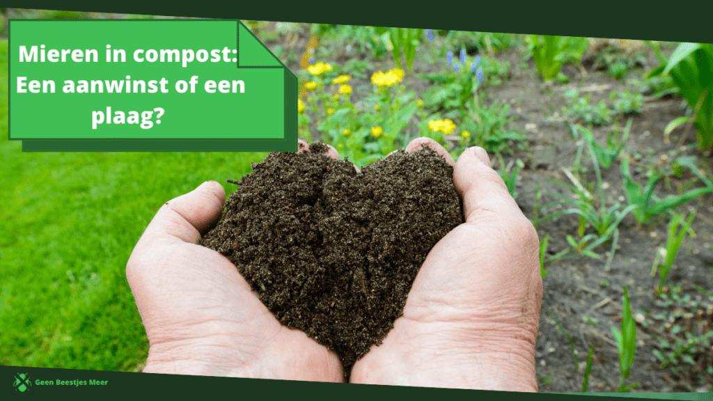 Mieren in compost_ een aanwinst of een plaag_