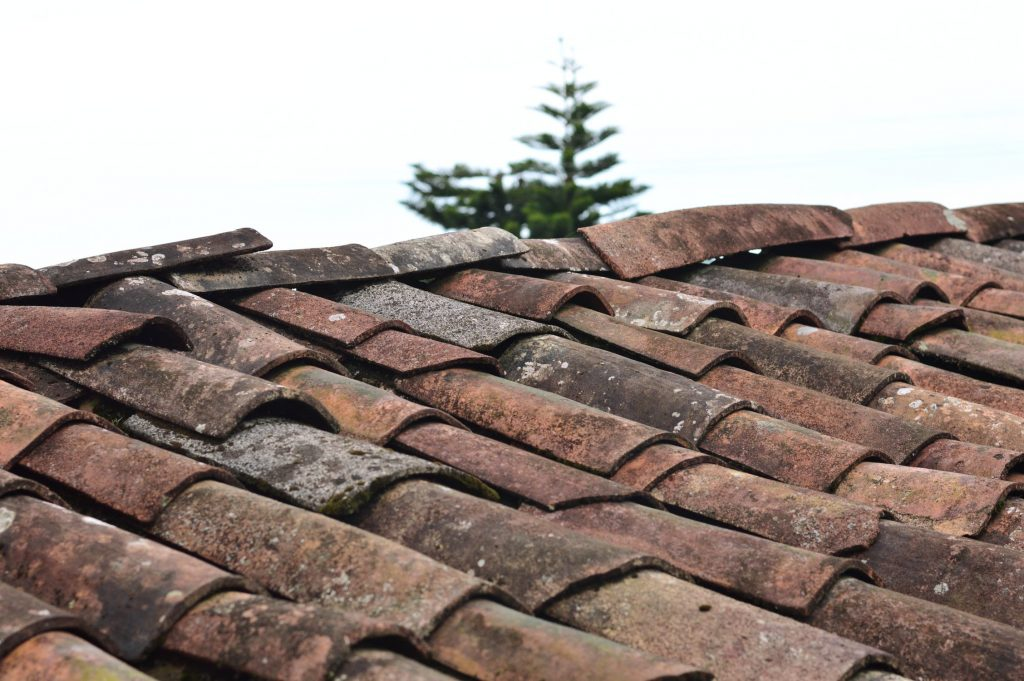 Mieren in het dak bestrijden