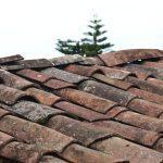 Hoe moet je mieren in het dak of het plafond bestrijden?