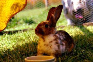 Verreweg de meeste vlooienproblemen ontstaan de (huis)dieren in de vorm van honden, katten, konijnen, muizen of ratten.