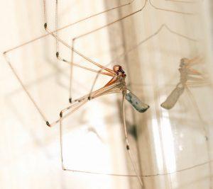 Het uit de kruipruimte houden van muggen en ander ongedierte is erg belangrijk omdat je niet vaak in de kruipruimte komt. Wanneer je achter een probleem komt, kan je al te laat zijn.