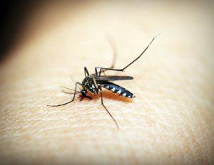 Een mug datzich met het bloed van een mens voedt
