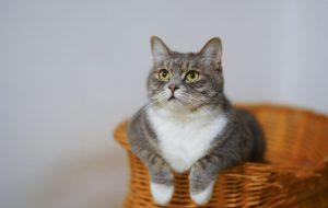 Katten en honden van vlooien ontdoen is vrijwel altijd de sleutel om blijvend van een vlooienprobleem af te komen.