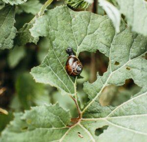 Foto van door slakken aangevreten bladeren