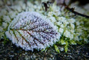 Foto van bevroren blad