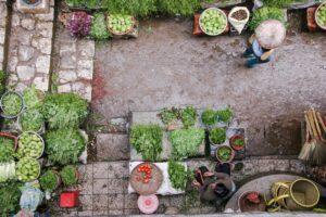 Foto van een tuin met verschillende groenten
