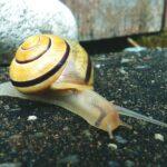7 Natuurlijke huismiddelen om slakken te bestrijden