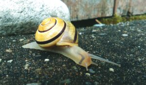 Foto van een slak op een weg