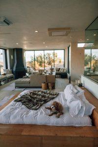 De beste plaats om een vlooienval neer te zetten is in de buurt van je bed, in de woonkamer of in de buurt van de slaapplaats van je hond of kat.