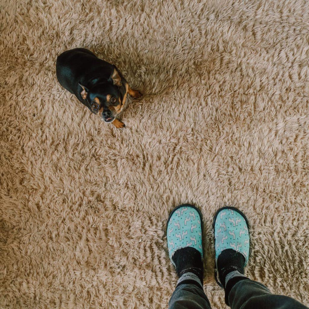 De hond, de mens, het tapijt en vlooien