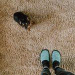 Vlooien in tapijten en vloerkleden aanpakken