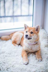 In verreweg de meeste gevallen is een vlooienprobleem het gevolg van honden en katten die buiten zijn geweest en de vlooien mee naar binnen nemen.