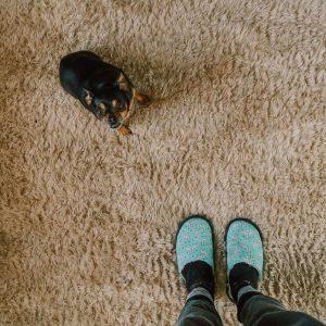 Je kan maar beter een keer voor niets naar de dierenarts zijn geweest dan dat er toch sprake is van een vlooienallergie bij je hond of kat.
