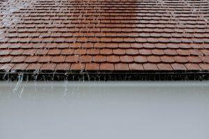 Dakgoten en regenpijpen zorgen voor een goede afvoer van regenwater, maar soms leveren zij problemen op door muizen de toegang tot je huis te geven.