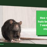 Hoe ratten in huis bestrijden: 7 eenvoudige stappen