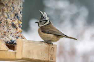 Foto van een exotisch vogel aan het eten in een volière