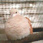 Muizen in de volière bestrijden: hou je vogels stressvrij