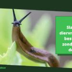 Slakken diervriendelijk bestrijden zonder ze te doden