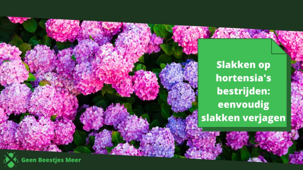 slakken hortensias bestrijden