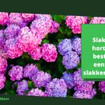 Slakken op hortensia's bestrijden: eenvoudig slakken verjagen
