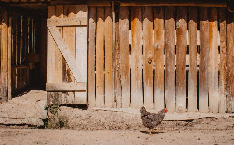 Foto houten kippenhok
