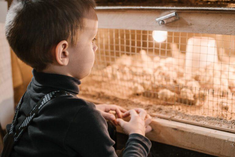 Kind bij kippenhok