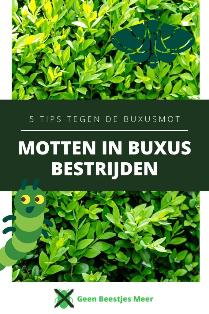 Motten in buxus bestrijden Pinterest