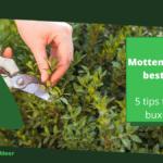 Motten in buxus bestrijden: 5 tips tegen de buxusmot