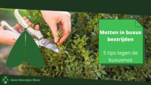 Motten in buxus bestrijden_ 5 tips tegen de buxusmot