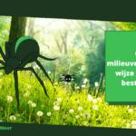 Op milieuvriendelijke wijze spinnen bestrijden: 7 natuurlijke manieren