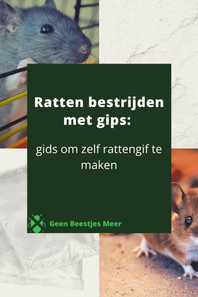 Pinterest Ratten bestrijden met gips