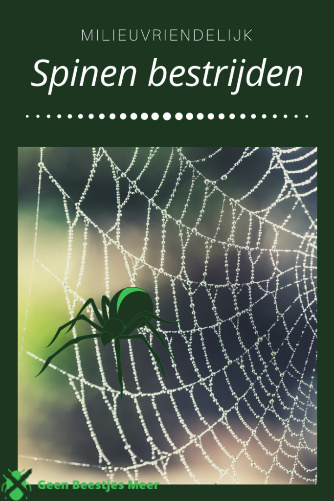 Pinterest Millevriendelijk spinnen bestrijden