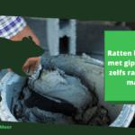 Ratten bestrijden met gips: gids om zelf rattengif te maken