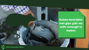 Ratten bestrijden met gips gids om zelfs rattengif te maken