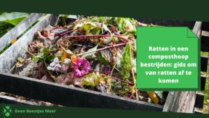 Ratten in een composthoop bestrijden