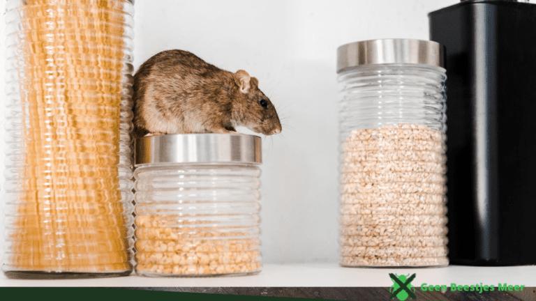 Geef ratten geen toegang tot voedsel