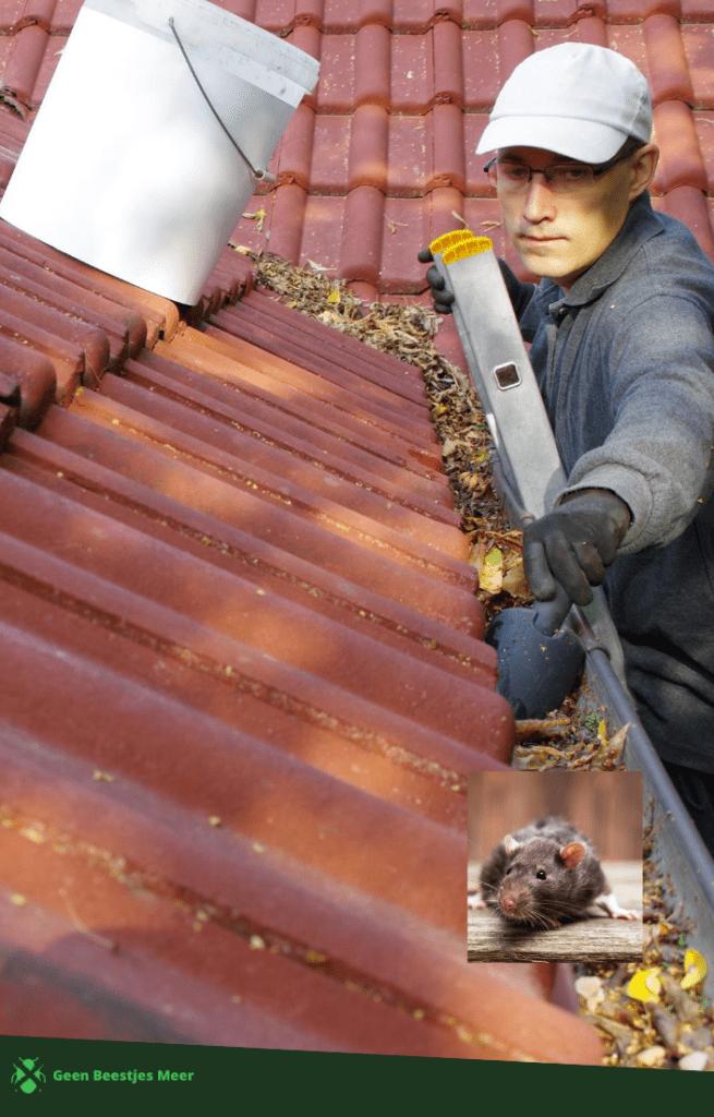 Hoe komen de muizen onder de dakpannen