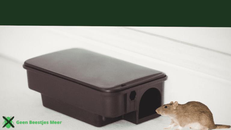 Lokdozen zijn de beste bestrijdingsmiddelen tegen ratten in de tuin